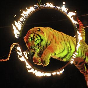 Цирки Сенгилея